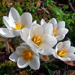 Пазл онлайн: Первоцветы