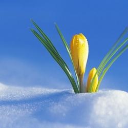 Пазл онлайн: Это весна