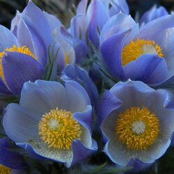 Пазл онлайн: Голубые краски весны