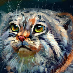Пазл онлайн: Кот манул