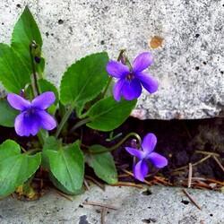 Пазл онлайн: Приметы весны