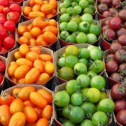 Пазл онлайн: Сортовые томаты