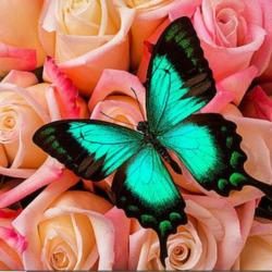 Пазл онлайн: Розы и бабочка