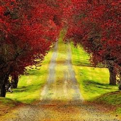 Пазл онлайн: Дорога между деревьев