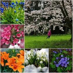 Пазл онлайн: Цветение весны