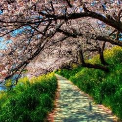 Пазл онлайн: В цвету