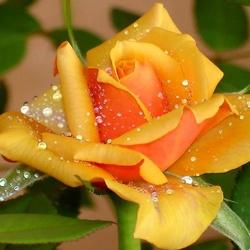 Пазл онлайн: Красавица в жемчугах