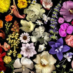 Пазл онлайн: Цветочная радуга