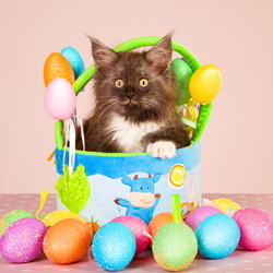 Пазл онлайн: Пасхальный котик