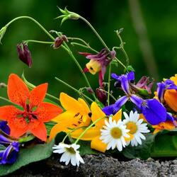 Пазл онлайн: Яркие цветы