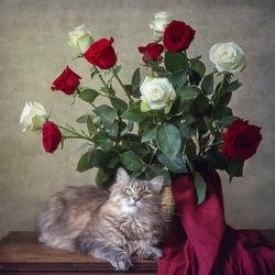 Пазл онлайн: Кошка Масяня и букет роз