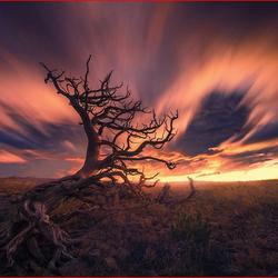 Пазл онлайн: Адское дерево