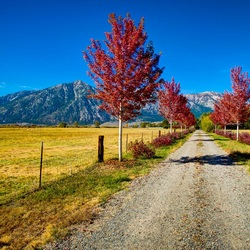 Пазл онлайн: Проселочная дорога