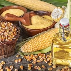 Пазл онлайн: Кукурузное масло