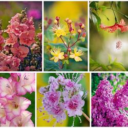 Пазл онлайн: Коллаж цветов