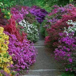 Пазл онлайн: Сад Леонардсли
