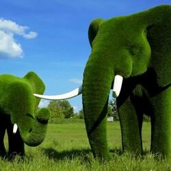 Пазл онлайн: Топиарное искусство