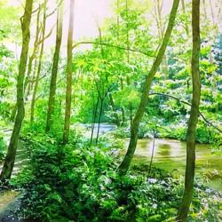 Пазл онлайн: Тропинка вдоль реки