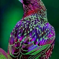 Пазл онлайн: Все цвета