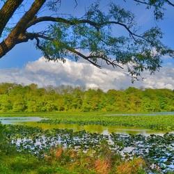 Пазл онлайн: Заросли травы в воде