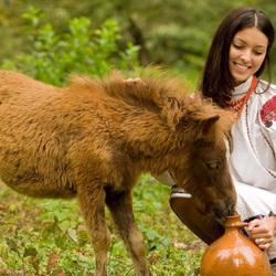 Пазл онлайн: Девушка и пони