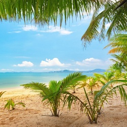 Пазл онлайн: Маленькие пальмы