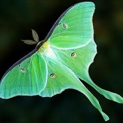 Пазл онлайн: Зелёная бабочка