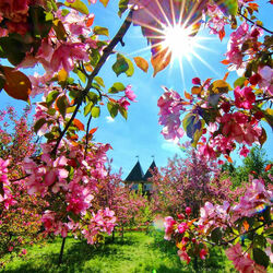 Пазл онлайн: Весна в Коломенском