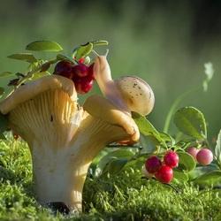 Пазл онлайн: Улитка, гриб и клюква
