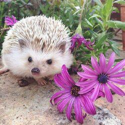Пазл онлайн: Ёжик в цветах