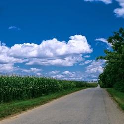 Пазл онлайн: Поле кукурузы
