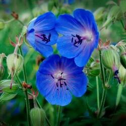 Пазл онлайн: Луговые цветы