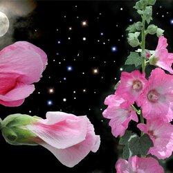 Пазл онлайн: Цветущие в  ночи