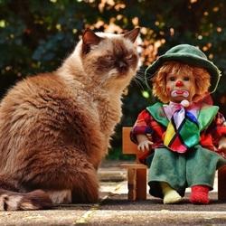Пазл онлайн: Кукла клоун