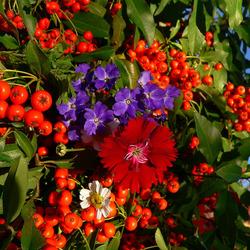 Пазл онлайн: Краски лета