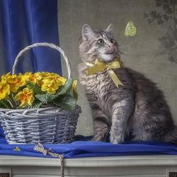 Пазл онлайн: Кошка Масяня и бабочка