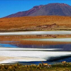 Пазл онлайн: Альпака у озера