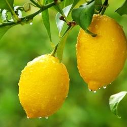 Пазл онлайн: Лимон