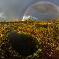 Пазл онлайн: Радуга на болотах