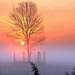 Пазл онлайн: Туманное утро