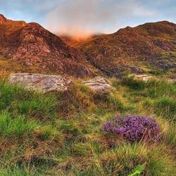 Пазл онлайн: Трава у гор
