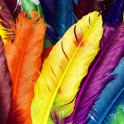 Пазл онлайн: Цветные перья