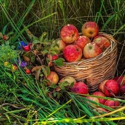 Пазл онлайн: Сезонные яблочки
