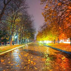 Пазл онлайн: Осенняя ночь