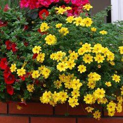 Пазл онлайн: Цветы за окном