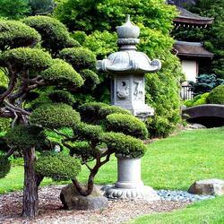 Пазл онлайн: Японский сад бонсай