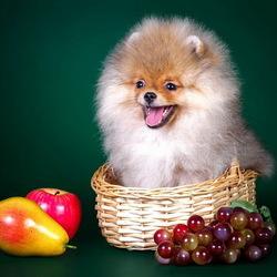 Пазл онлайн: Собачка в корзинке
