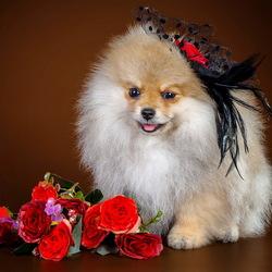 Пазл онлайн: Собачка и цветочки
