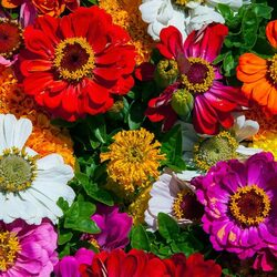 Пазл онлайн: Цветы лета