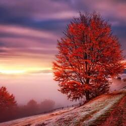 Пазл онлайн: Багряная осень